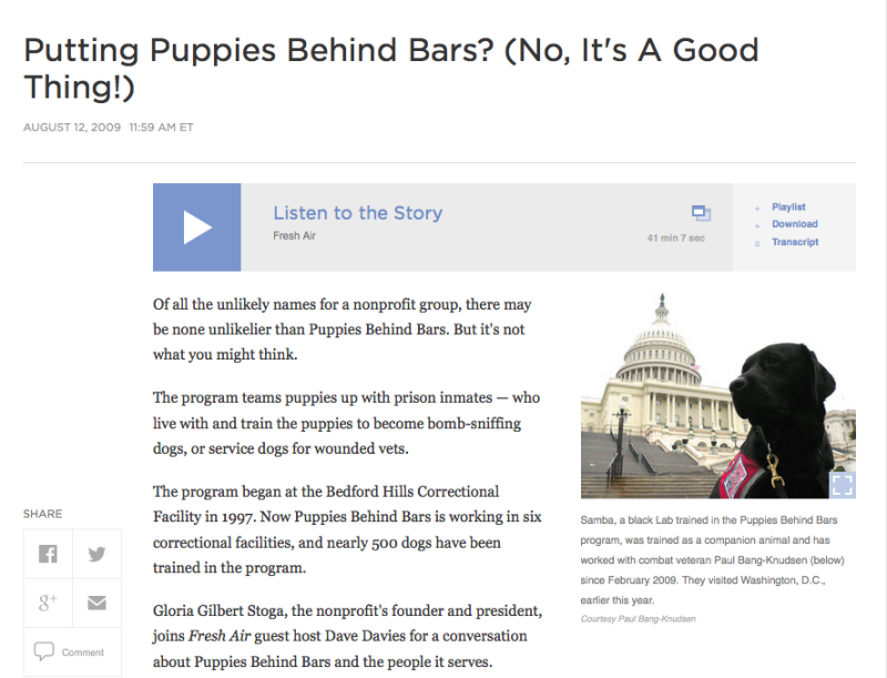 RItual design lab - puppies behind bars - puppy ritual - puppy wellbeing